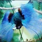 f94c0 paradijsvogel4 150x150 - Paradijsvogels